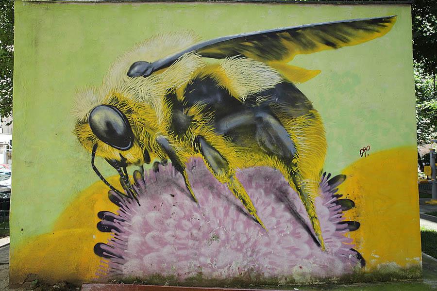 picturi murale  graffiti  lunoxconstructro
